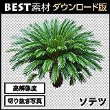 【BEST素材】高解像度の切り抜き写真_ソテツ01 [ダウンロード]