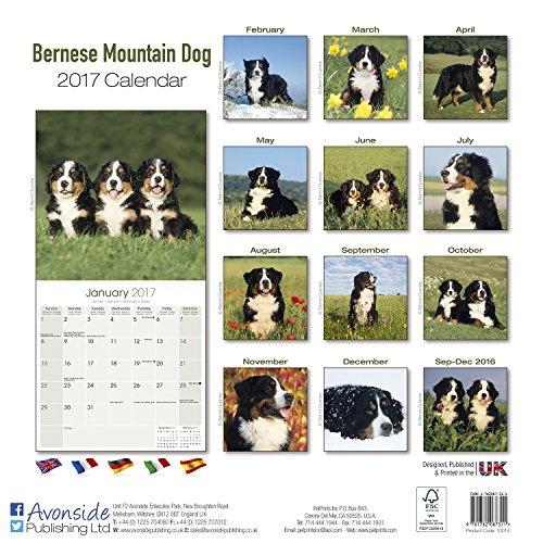 『Bernese Mountain Dog Calendar 2017 (Square)』の1枚目の画像
