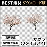 【BEST素材】高解像度の切り抜き写真_サクラ(ソメイヨシノ)01 [ダウンロード]