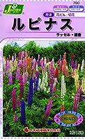 カネコ種苗 草花タネ790 ルピナス ラッセル 混合 10袋セット
