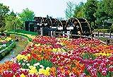 108ピース ジグソーパズル チューリップ-花薫る-(富山) ラージピース(26x38cm)