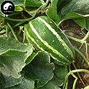 スワンズグリーン購入するクリスプメロンシード100個植物スネークメロン野菜ルパCylindrica