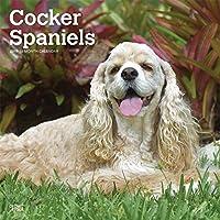 Cocker Spaniels 2019 Calendar