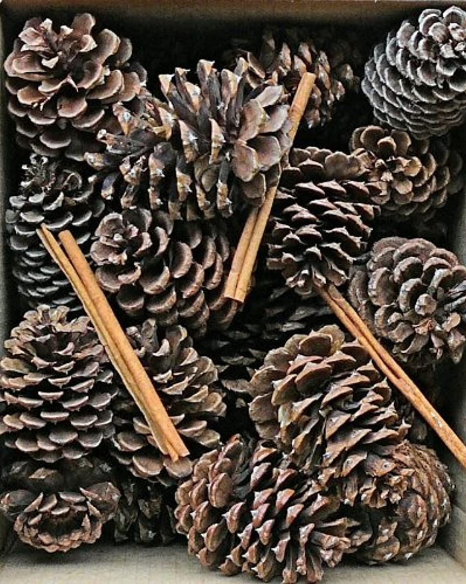 赤外線円周取得するCinnamon Scented Pine Cones with Cinnamon Sticks 30 perボックスブラウン(ナチュラル) Case of 180 pine cones