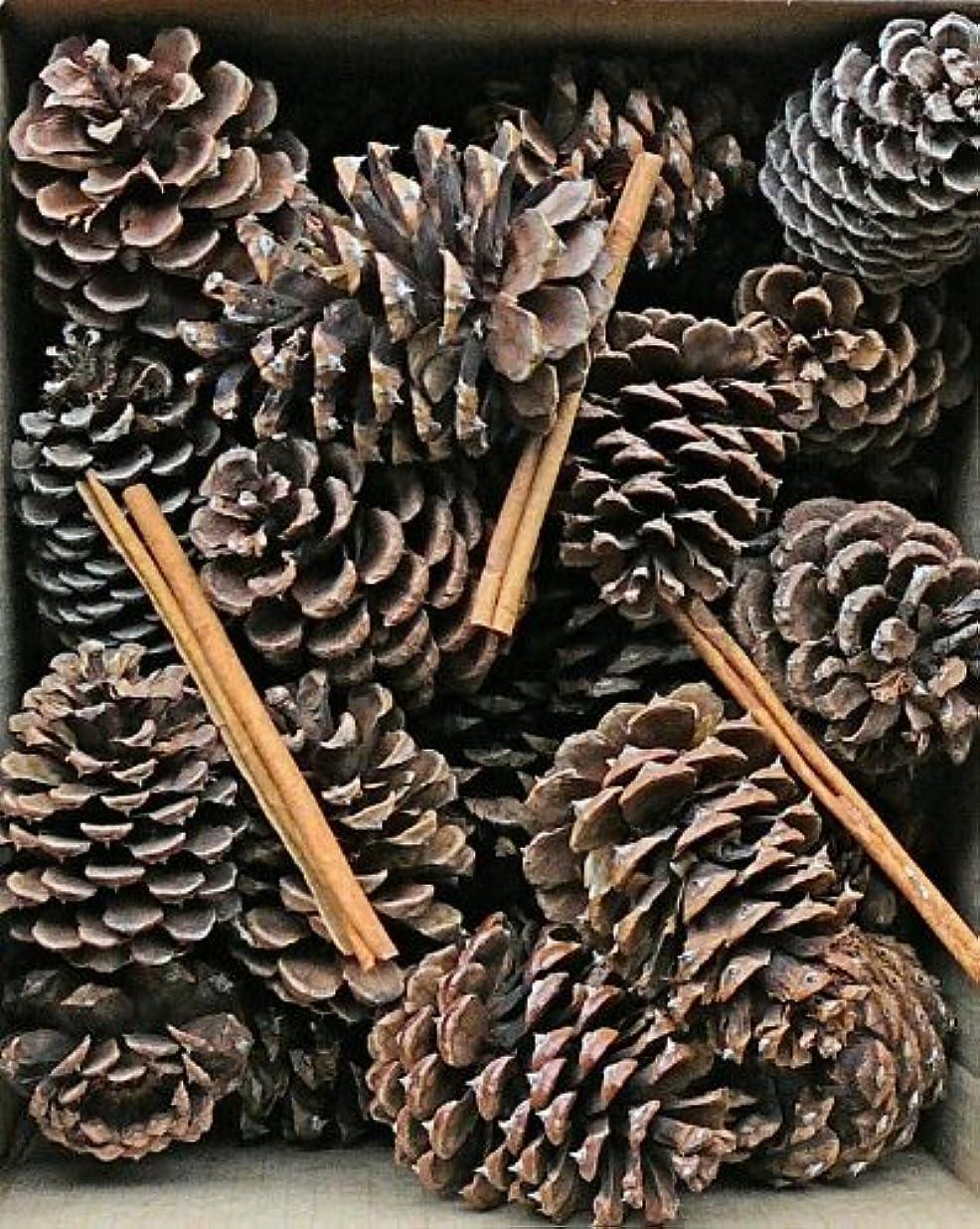 反映する外国人コイルCinnamon Scented Pine Cones with Cinnamon Sticks 30 perボックスブラウン(ナチュラル) Case of 180 pine cones