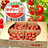 北海道 南幌町産 ミニトマト ラブリー藍 3kg