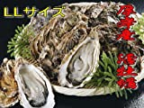 北海道・厚岸産 殻付活牡蠣【LLサイズ】10個 カキナイフ付