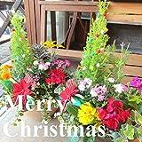 クリスマスのおまかせ寄せ植え(テラコッタ風オーバル形樹脂鉢植え) (ベージュ)