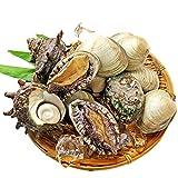 アワビ サザエ ホンビノス 海鮮活貝3点盛 お刺身 網焼き BBQ 魚介類 海産物 貝類