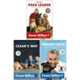 Cesar Milan 3 Books Collection Set (How to Raise the Perfect Dog, Cesar's Way: Everyday Guide to Understanding & Correcting C