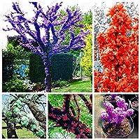 混合:20個/袋バウヒニア種、Cercis Chinensis、盆栽花の種、中国のアメリカハナズオウの種子、ホームガーデン用の自然な鉢植えの植物