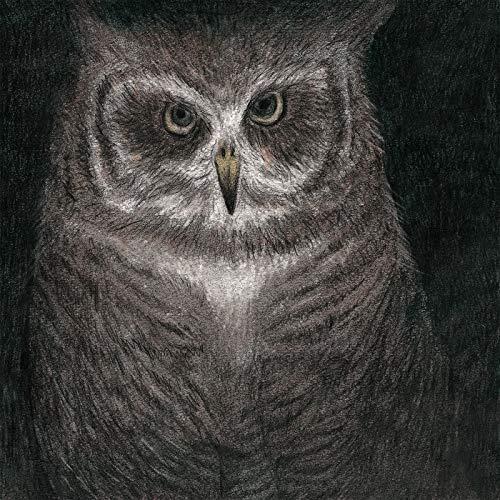 フクロウの声が聞こえる