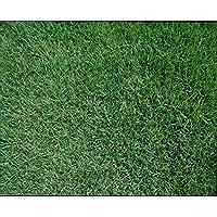 Amazon.co.jp: 野芝の種