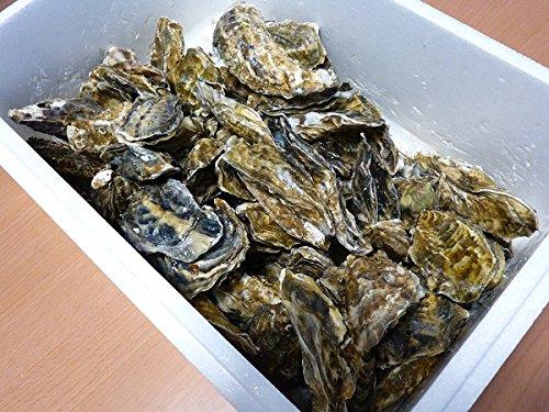 『北海道・生牡蠣(かき)(殻付き)牡蠣・厚岸西岸 仙鳳趾【牡蛎】訳あり8キロ【生食用】』の2枚目の画像