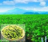 山形県産 だだちゃ豆 産地直送 国内最高峰の枝豆 (秀品1kg)