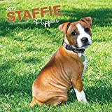 Staffordshire Bull Terrier Puppies 2019 Calendar