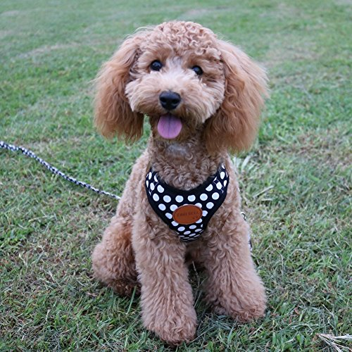 RantBell(ラントベル)『ドット柄小型犬ハーネス』