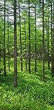 風景写真ポスター  長野県蓼科高原 新緑のカラマツ林15 信州の自然を最高級の素材とこだわりのプリントで再現 (サイズ59.4×35cm余白あり)