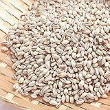 国産 もち麦 無添加 お得用 1kg スーパーフード もちむぎ