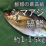 縞鯵 シマアジ(築地直送)約1-1.5kg 熊本産他