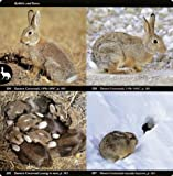 National Audubon Society Field Guide to North American Mammals: (Revised and Expanded) (National Audubon Society Field Guides) 画像