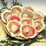 殻付ほたて貝 10枚入り 調理しやすい片貝でバター焼きやバーベキューに《※冷凍便》