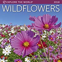 Wildflowers Wall Calendar 2018 [並行輸入品]
