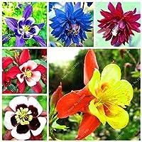 混合:100ピースAquile種子ileile Viridiflora淡い花の種多年生の花の種ホーム家族の庭植物盆栽の装飾