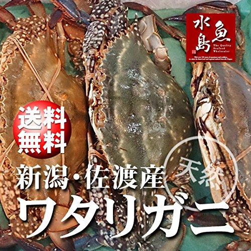魚水島 新潟・佐渡産 天然 ワタリガニ 渡り蟹 大5杯