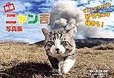 旅猫ニャン吉 写真集