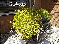 4:珍しいゴールドモスセダムの種200粒子美しい花の種ゴールデンエーカーセダムストーンクロップグラウンドカバー成長するのは簡単