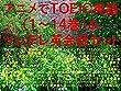 アニメでTOEIC英語1~14巻&ツンデレ英会話セット(ナイツ&マジック、賭ケグルイ、天使の3P!、メイドインアビス、けもフレ、ソードアート・オンライン、リゼロ、シュタゲ、東京喰種、黒バス、ブリーチ、ワンピ、ナルト、ひなこのーと、武装少女マキャヴェリズム、サクラダリセット、月がきれい、正解するカド、ダンまち、ロクでなし、エロマンガ先生、すかすか、ゼロの書、Re:CREATORS、アリスと蔵六、