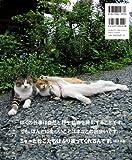 岩合光昭のネコ-47都道府県の408にゃんこ 画像
