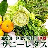 無農薬・無化学肥料サニーレタス 10株(千葉産・放射性物質検査済)