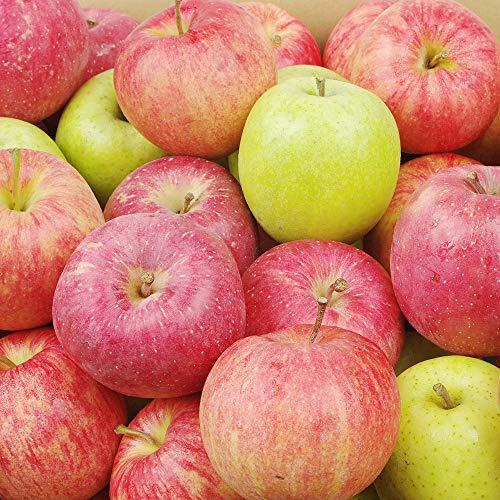 国華園 青森産 おまかせちびりんご・青 10kg ご家庭用