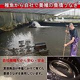 【ご自宅用】豊橋うなぎ 肝蒲焼き串打ち 5本入×1パック [簡易箱]