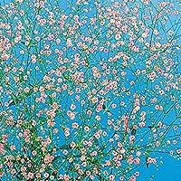 【メール便配送】国華園 種 花たね 赤花かすみ草 1袋(500mg)【※発送が株式会社 国華園からの場合のみ正規品です】