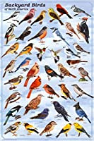 Backyard Birds Poster 【Creative Arts】 [並行輸入品]