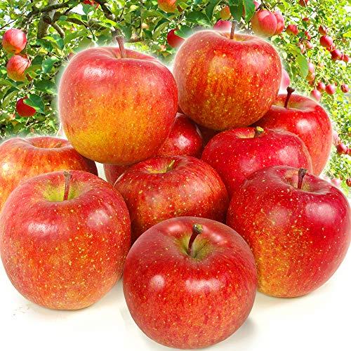 国華園 青森産 サンふじ 10kg1箱 りんご