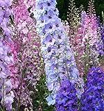100%本物の100種子/袋混合デルフィニウムのシャルドネ種、花の種consolidaロケット、家庭菜園のための明るい色