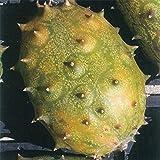 [タネ]グリーンゼリーメロン(キワーノ)の種 2個セット ノーブランド品
