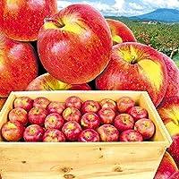 国華園 青森産 ご家庭用 葉とらずふじ 木箱入り20kg1箱 りんご