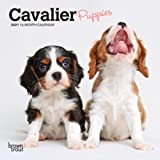 Cavalier King Charles Spaniel Puppies 2021 7 x 7 Inch Monthly Mini Wall Calendar, Animals Dog Breeds Puppies