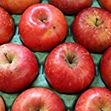 りんご 10kg箱 サンふじ 訳あり 青森県産りんご 現在はサンふじ 10キロ箱 林檎 4589677184115