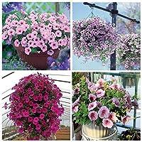 45個のLy Petuniaの種成長するのが簡単な庭のための美しいペチュニアの花の種:クリア