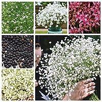 ミックス:100個の美しい芳香族カスミソウ種子真の星空の種子花の種鉢植えシュッコンカスミソウPaniculata