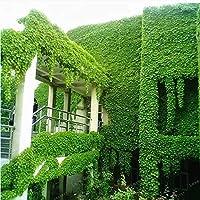 グリーンボストンアイビー盆栽屋外植物ほとんどケア装飾クライミングプラント100%真Parthenocissus Tricuspidata 50PCS:1