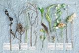好奇心のある部屋  植物をはじめ、生物たちとの愛おしい空間を作るフレンチシック&シャビーのインテリア 画像