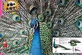 DVD付 鳥 (学研の図鑑LIVE) 画像