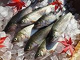 魚沼産 虹鱒(にじます)18�pサイズ 12尾入(冷凍)